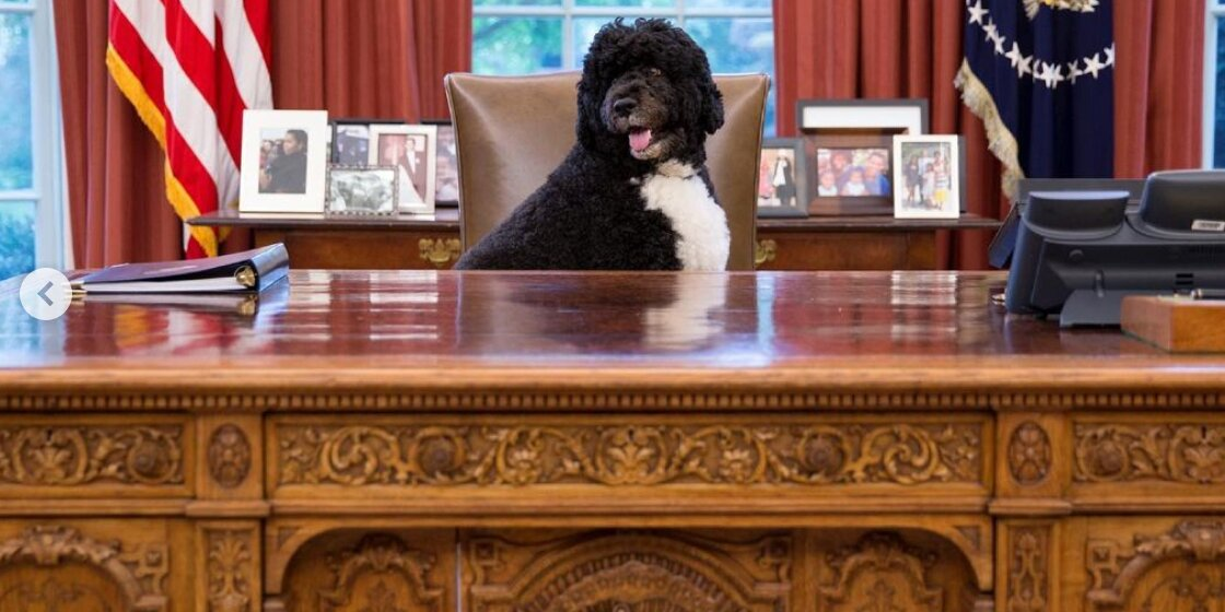 Michelle and Barack Obama Mourn the Death of Beloved Dog Bo: He 'Was a Constant, Comforting Presence'