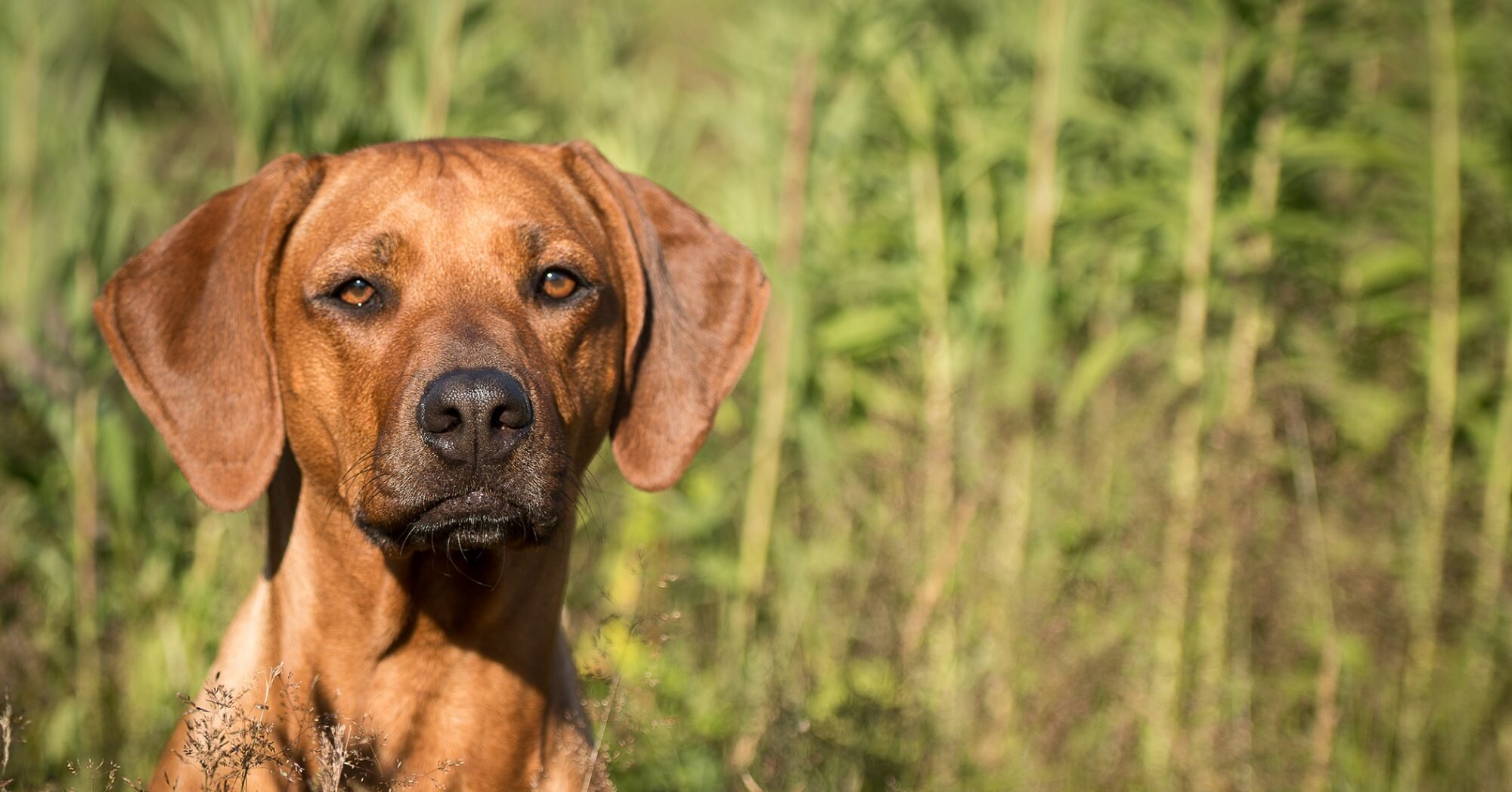 11 of the Most Popular Hound Dog Breeds Both Big and Small