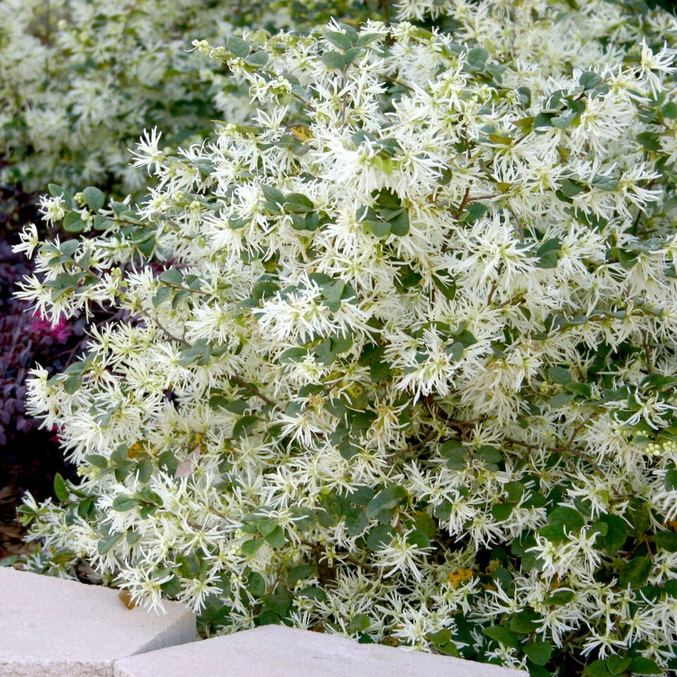 10 Great Plants For The Front Of Yard Southern Living