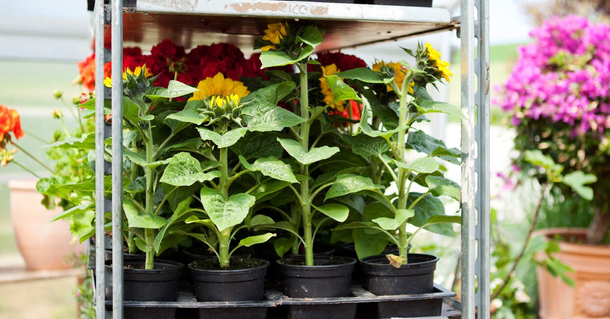 How to Identify Healthy (and Unhealthy) Plants at a Garden Center
