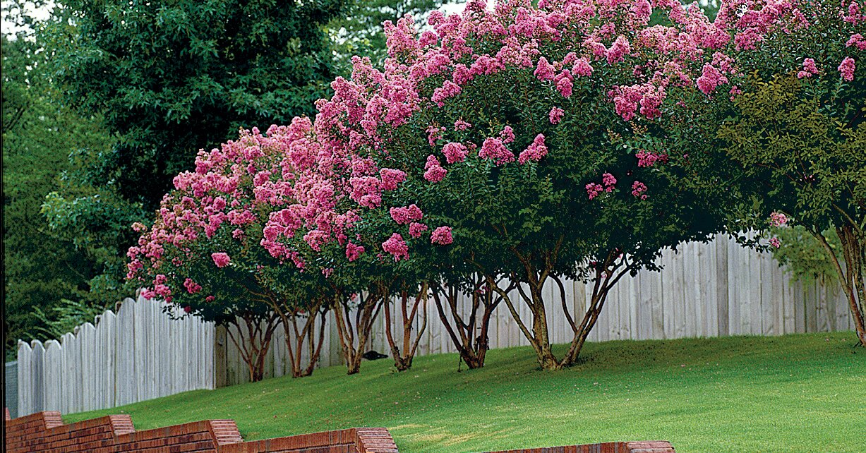 8 Best Trees For Small Yards Southern Living
