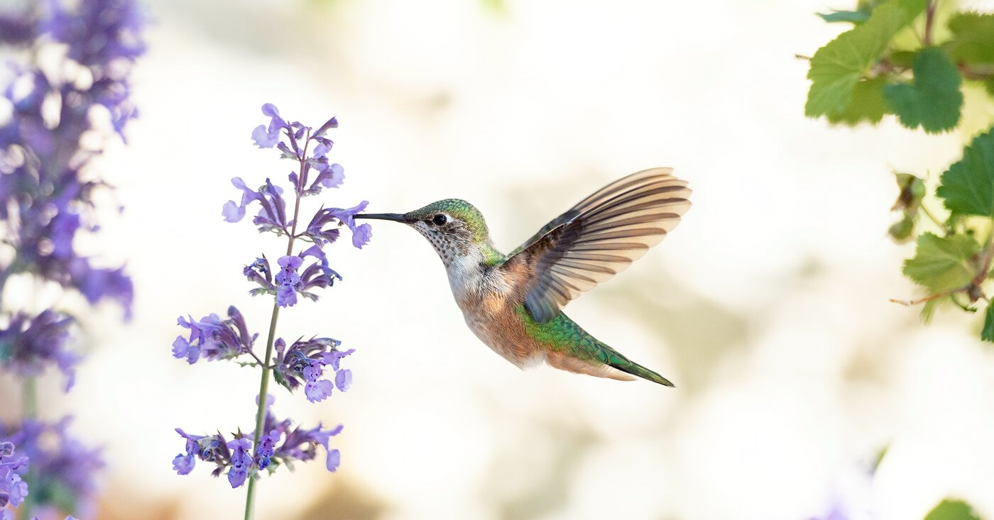 Six Plants and Flowers That Will Attract More Hummingbirds to Your Garden