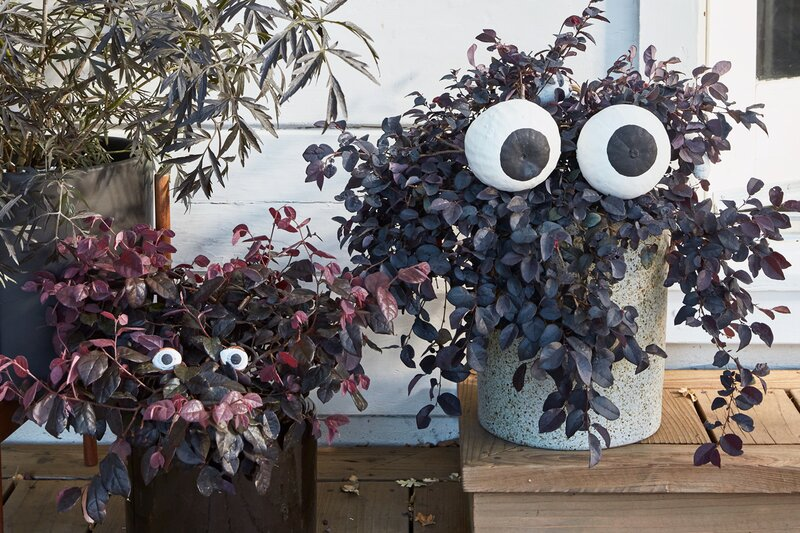 halloween eyes for outdoor planters