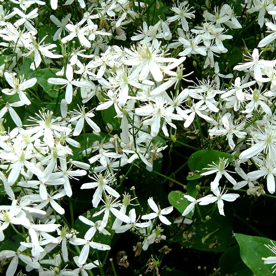The South S Best Fragrant Plants For Your Garden Southern Living