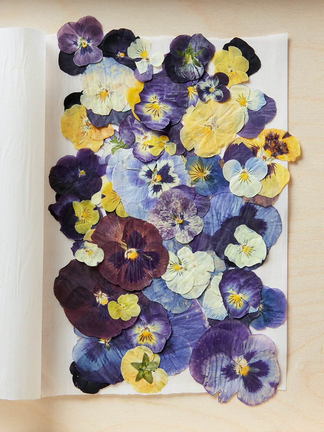 Pressed Flowers How To Make Your Own Better Homes Gardens