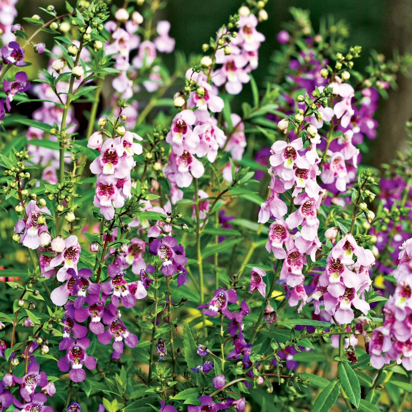 10 Flowers That Thrive In Full Sun Southern Living