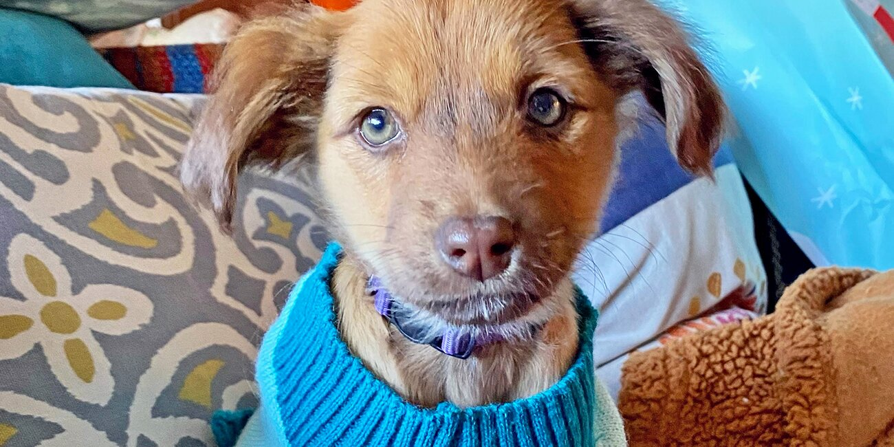 14 Puppies and Kittens You Can Adopt During the Puppy Bowl