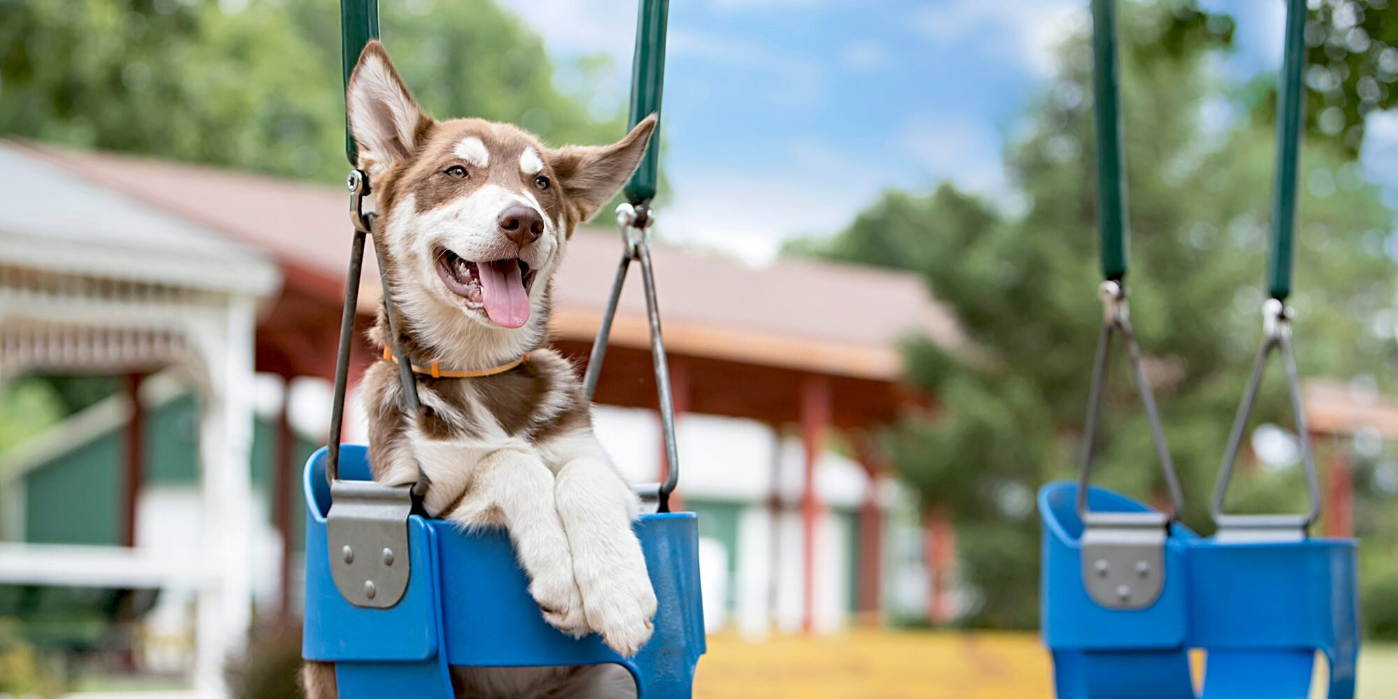 These Old Fellas Pushing Their Dogs in Swings Are Pure Bliss