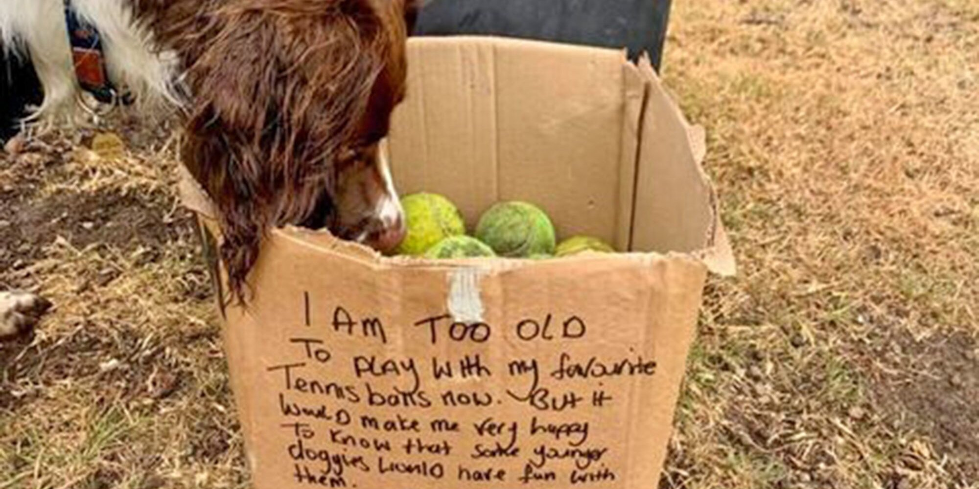 You Have to Read This Incredibly Sweet Message an Older Dog Left on His Box of Old Tennis Balls