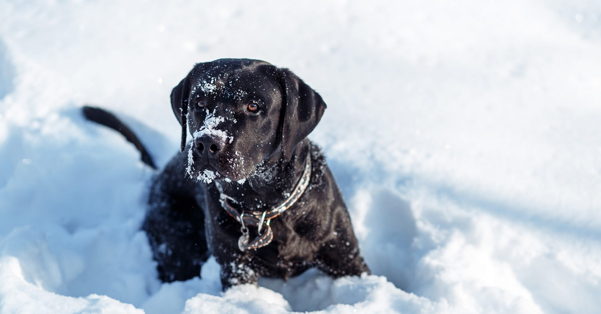 Winter Isn't So Ruff for This Rescue Pup