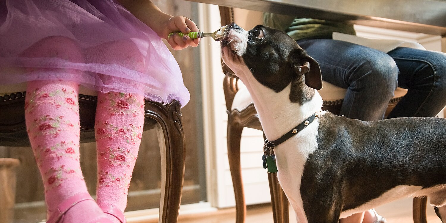 It's Unsafe to Feed Your Dog Scraps from the Thanksgiving Table (Even Turkey!), Vet Expert Says