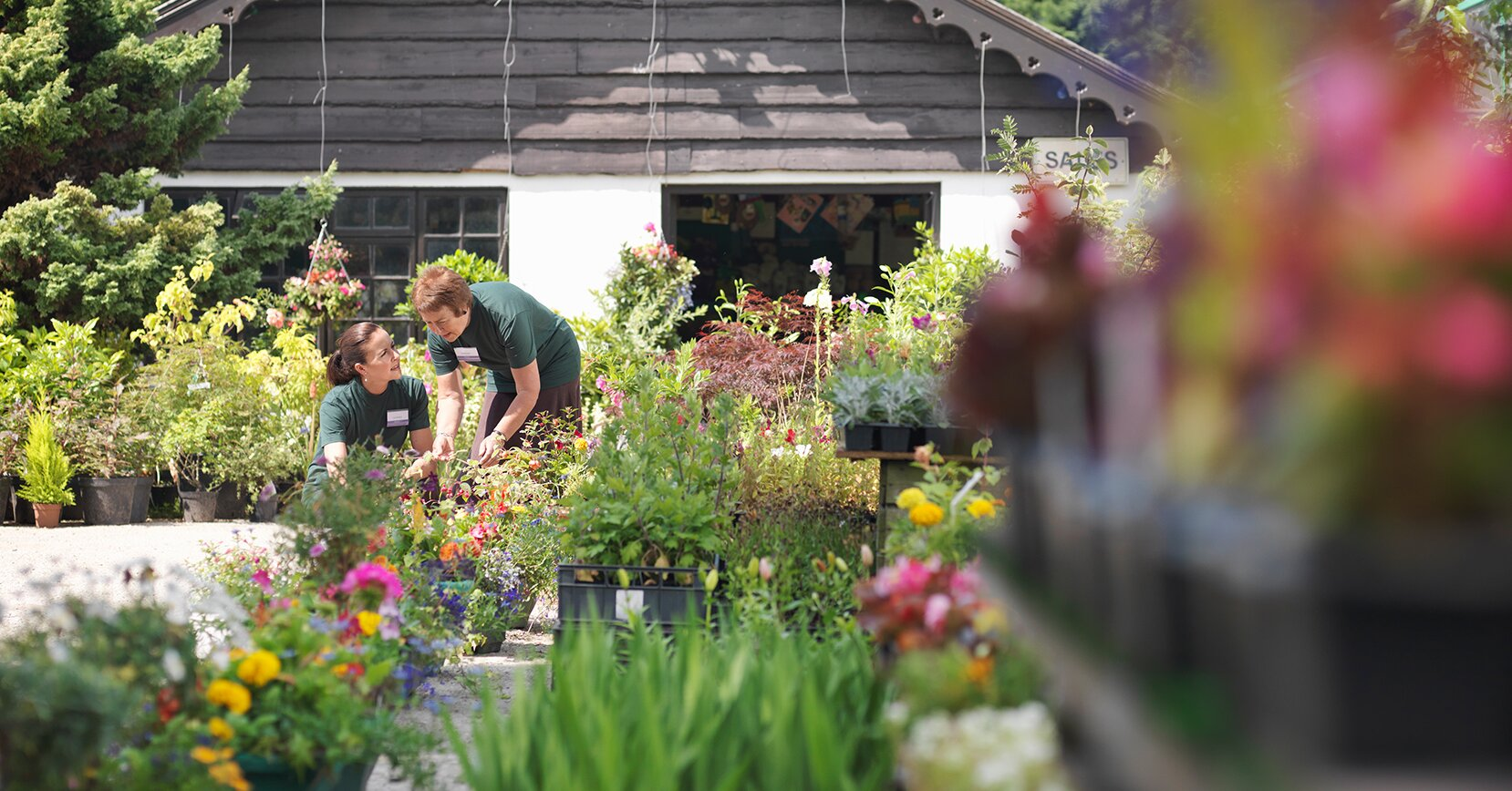 What to Look for When Purchasing Annual Flowers at a Garden Center