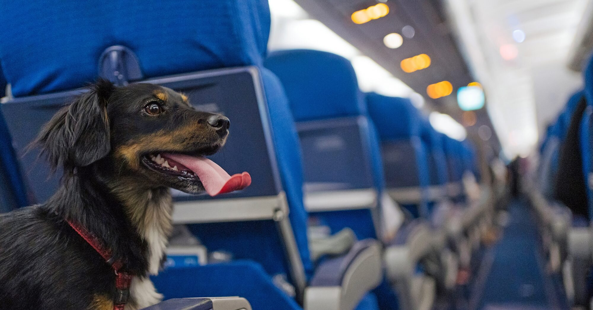 Flying With Emotional Support Animals May Soon Be a Thing of the Past