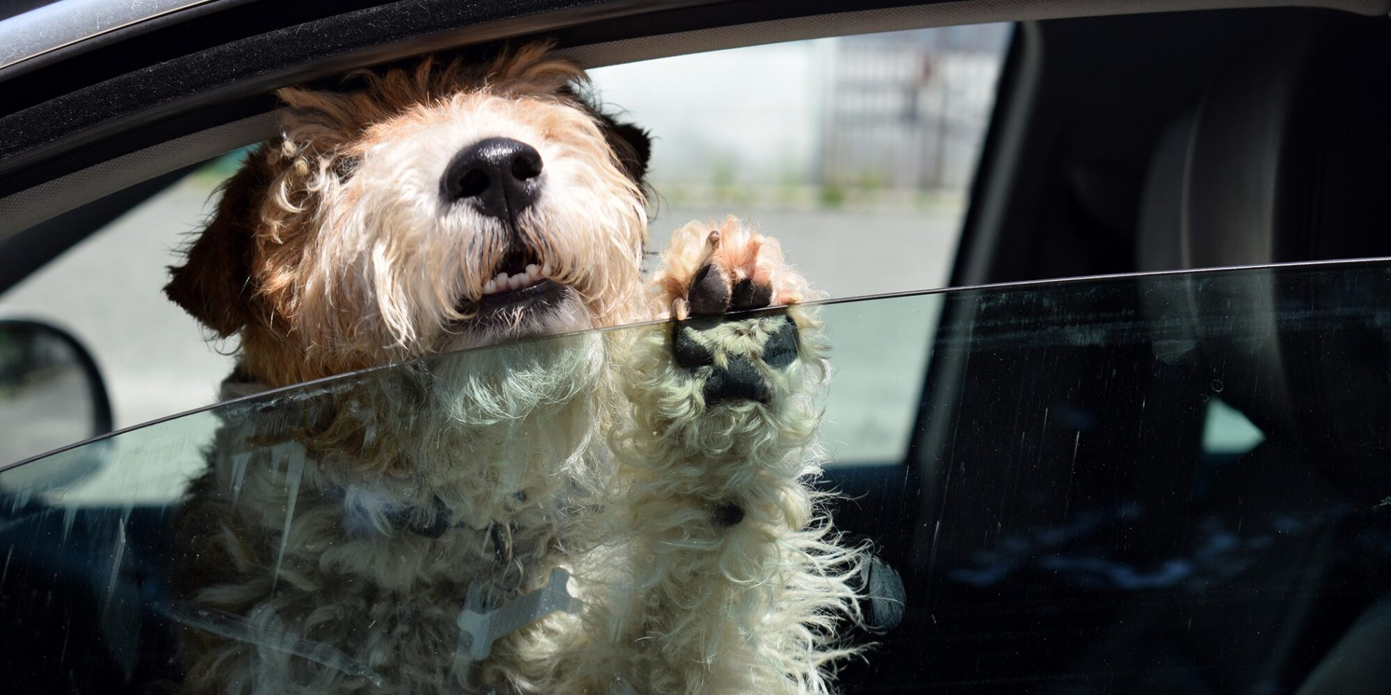 Exactly What to Do If You See a Dog In a Hot Car (And Why)