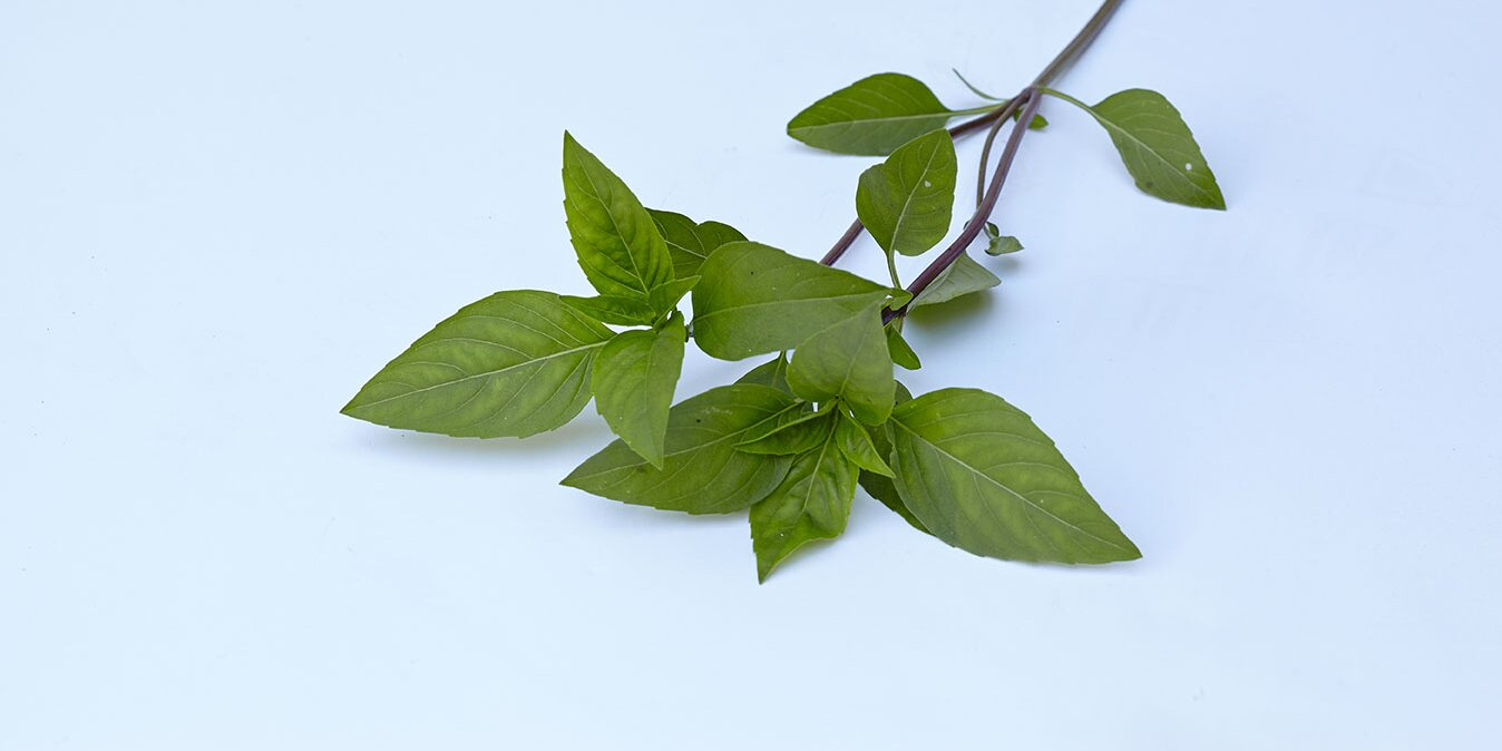 thai basil vs basil whats the difference