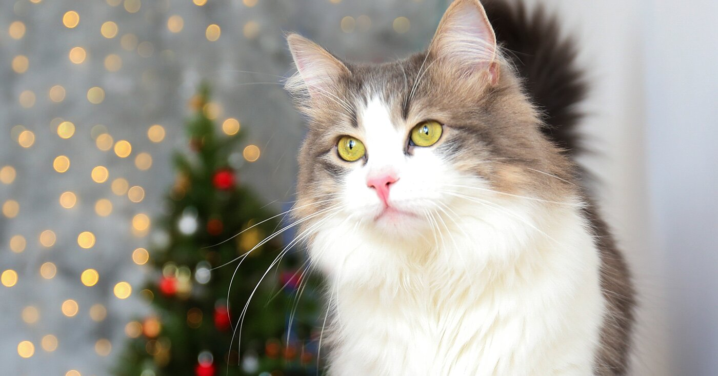 10 Friendly Cat Breeds that Make Perfect Pets