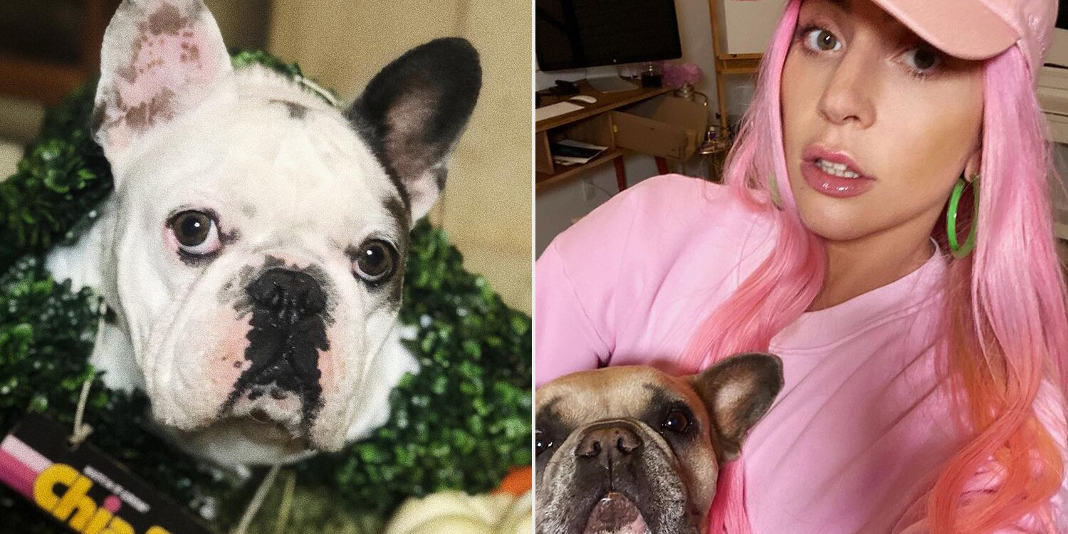 Dramatic Video Appears to Show Lady Gaga's Dog Walker Getting Shot During Theft of French Bulldogs.jpg