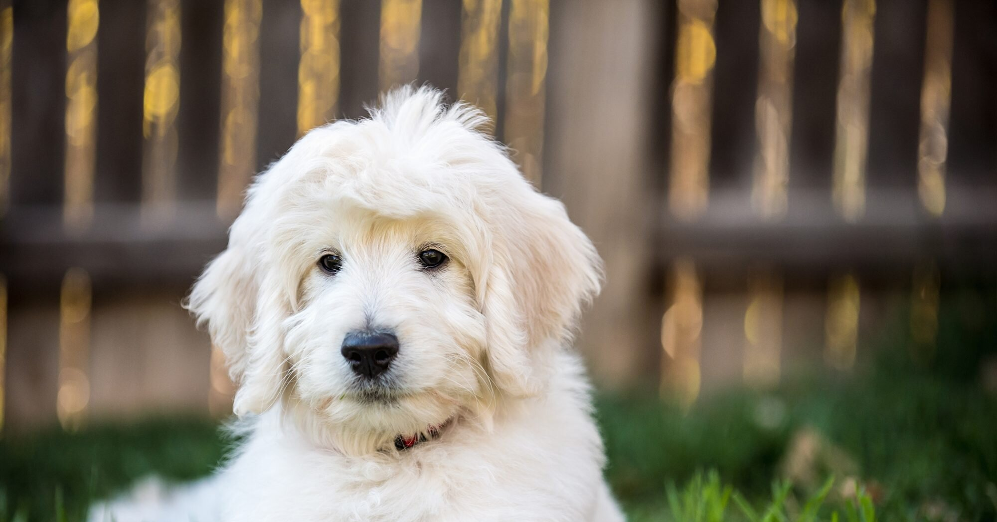 153 of the Cutest Food Names for Dogs