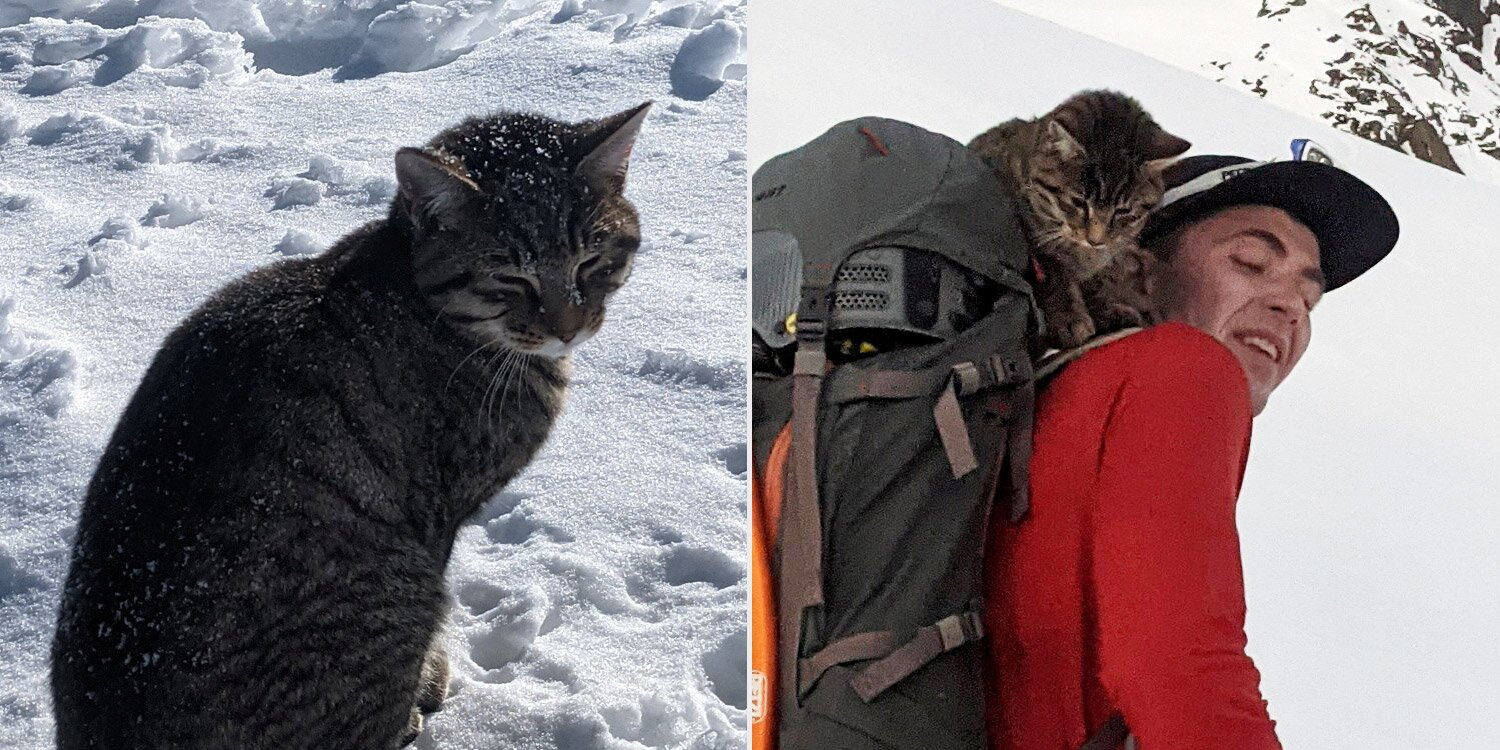 Cat Lost on Swiss Mountain Follows Hikers to 10,000-Foot-Tall Summit for Company and Comfort