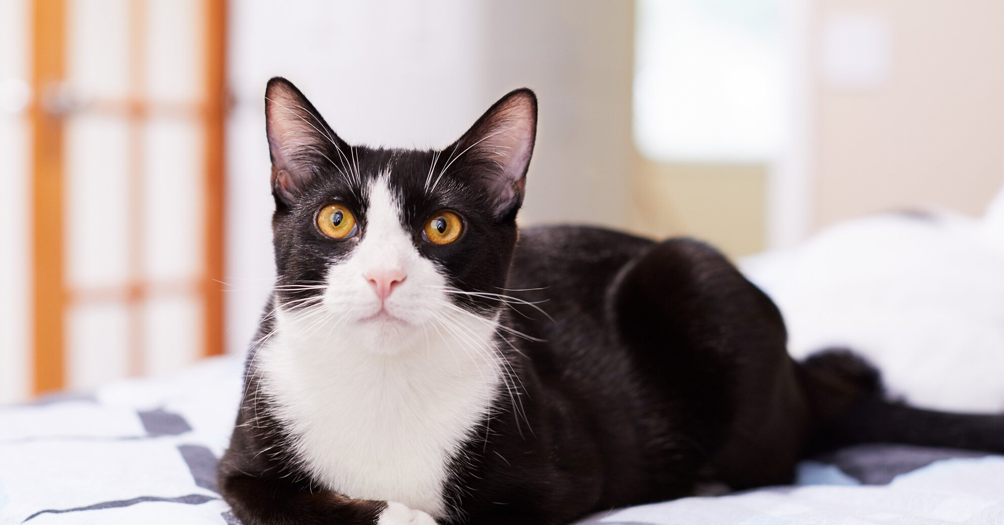 50 Black And White Cat Names That Pet Owners Will Love Better Homes Gardens