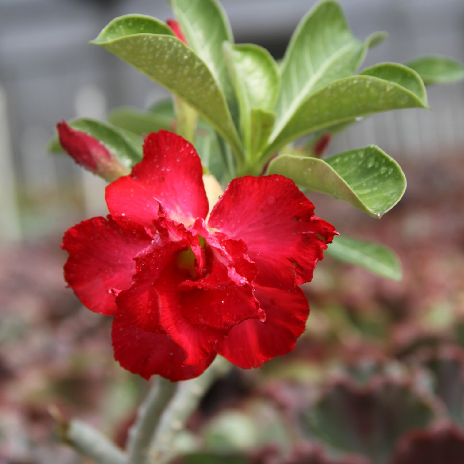 15 Impossible To Kill Outdoor Plants Real Simple