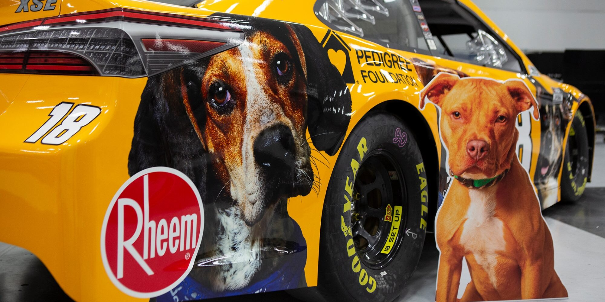 NASCAR Champion Kyle Busch Helps Adorable Dogs Find Their Forever Homes in the Coolest Way