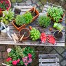 outdoor table with plants and gardening supplies