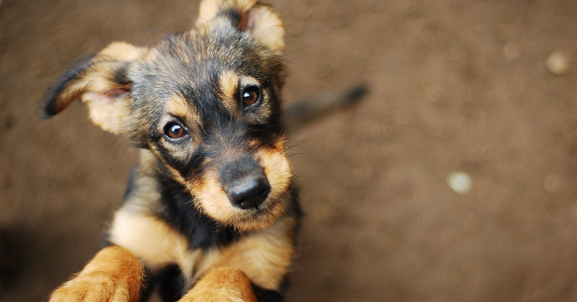 New Study Reveals the Words Dogs Love to Hear the Most