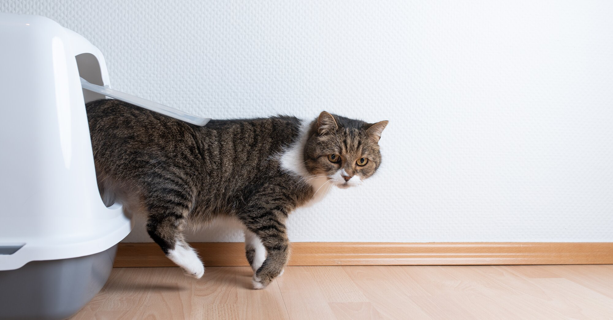 Five of Your Pet's Common Messes and the Easy Cleanup Solution for Each