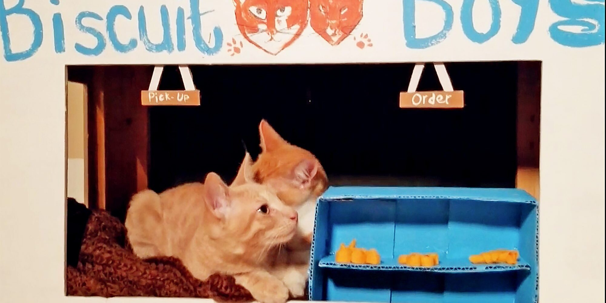 Orphaned and Abandoned Kitties Become Mayors of 'Cat City'