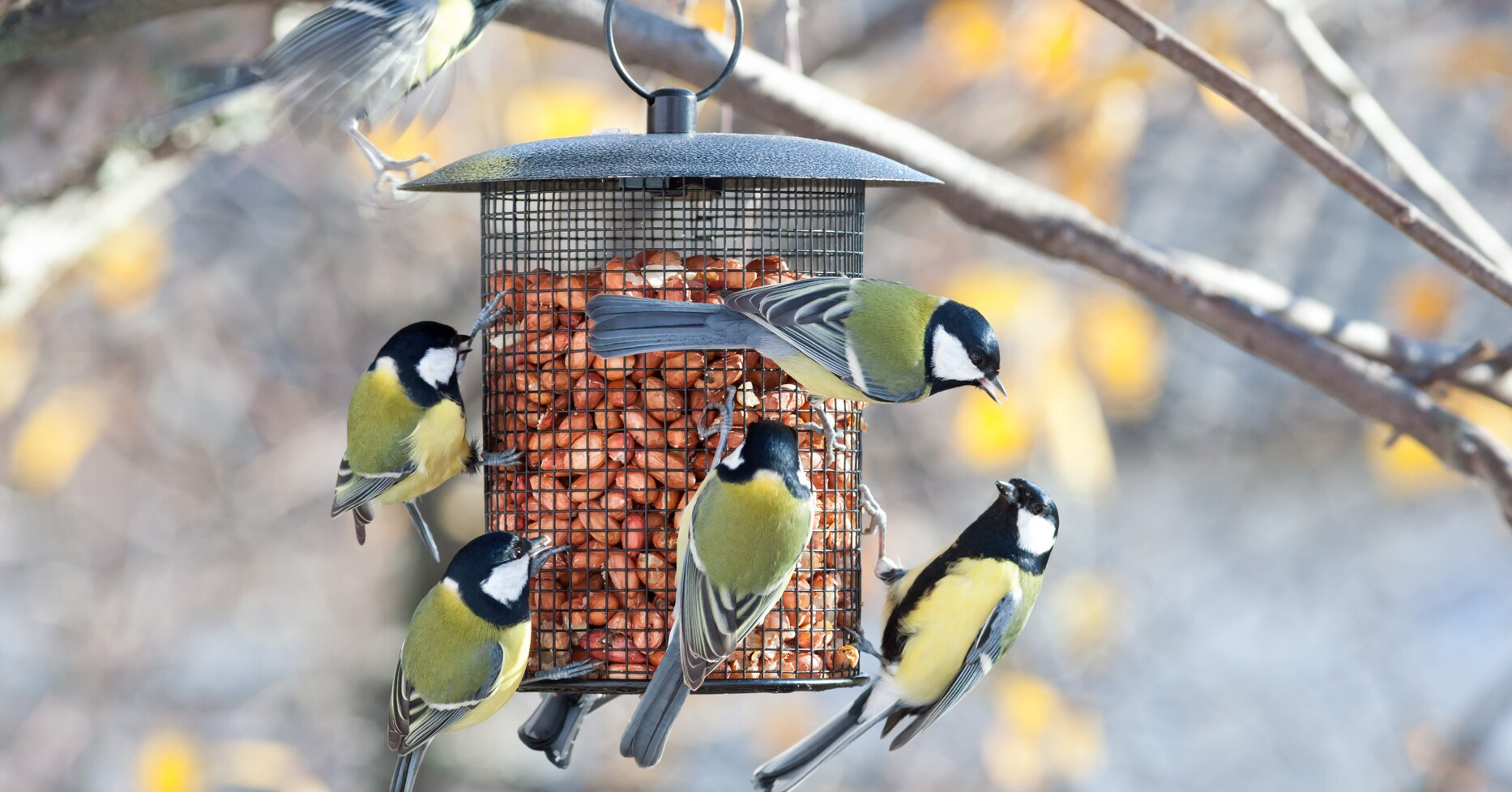 Five Reasons Why the Birds Have Stopped Visiting Your Feeder