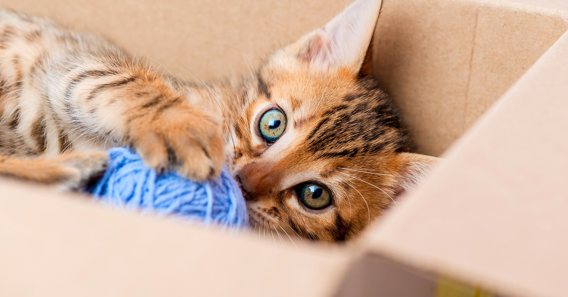 Why Does Your Cat Like Boxes So Much?
