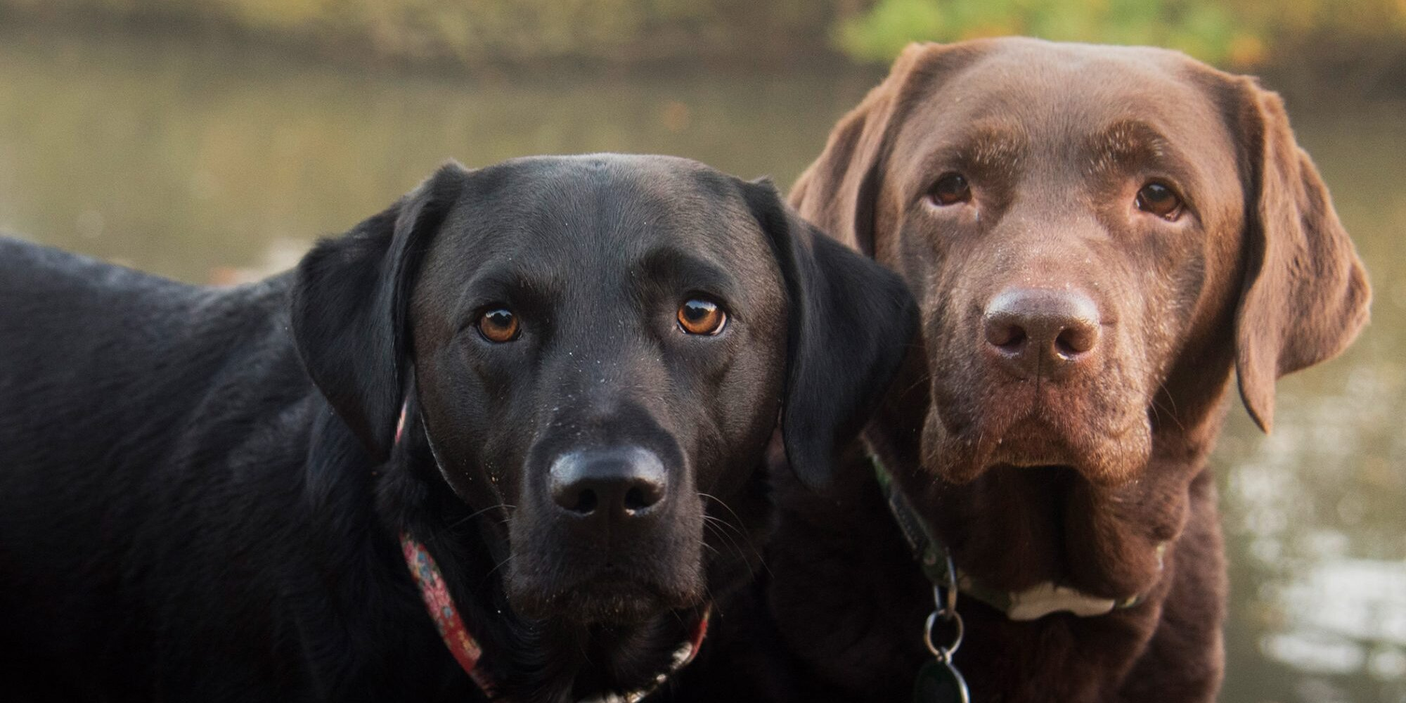 These Hero Dogs Are Cleaning Up the World, One Bottle at a Time