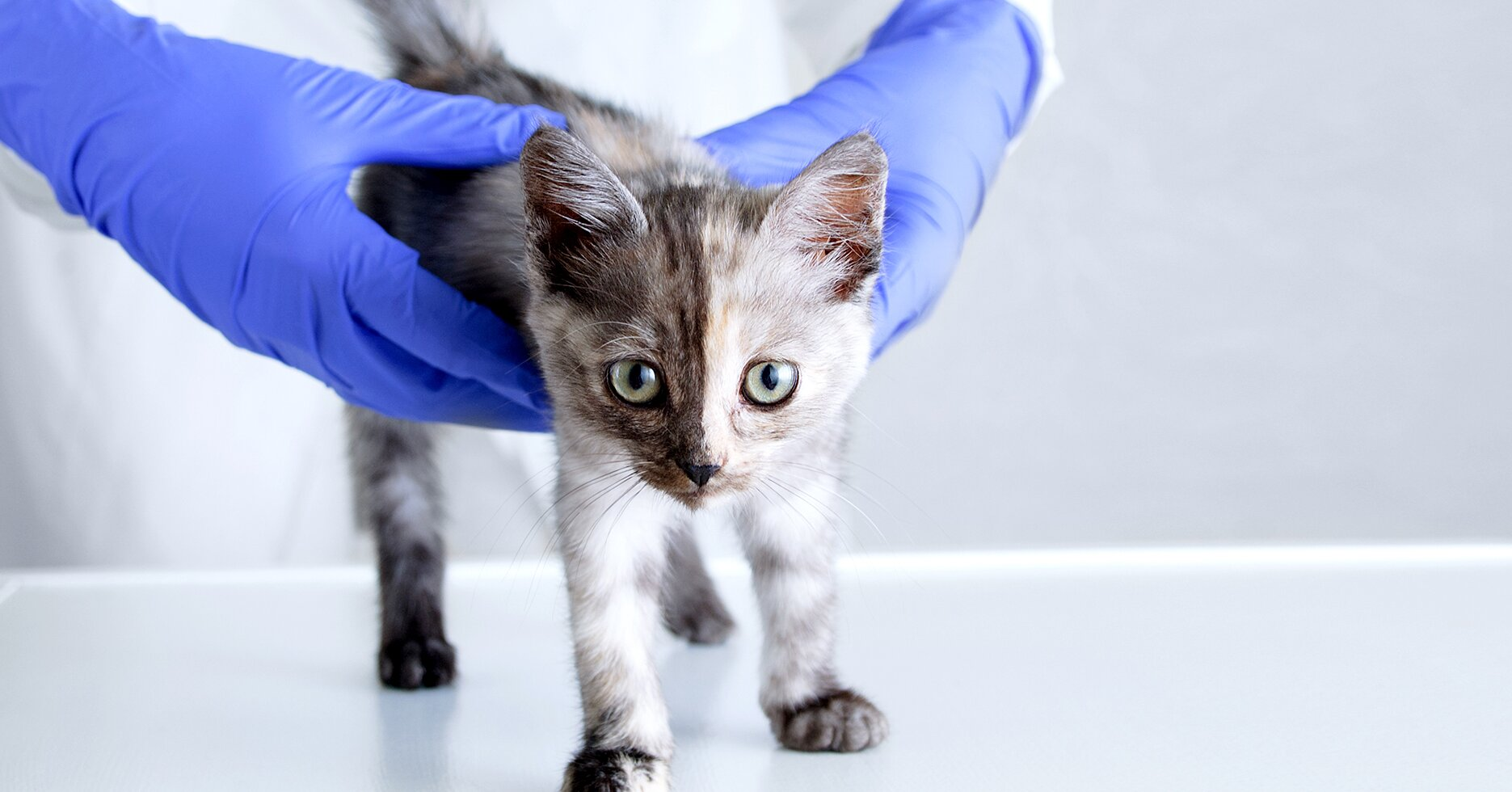 How Often Should You Get Your Pet's Blood Tested?