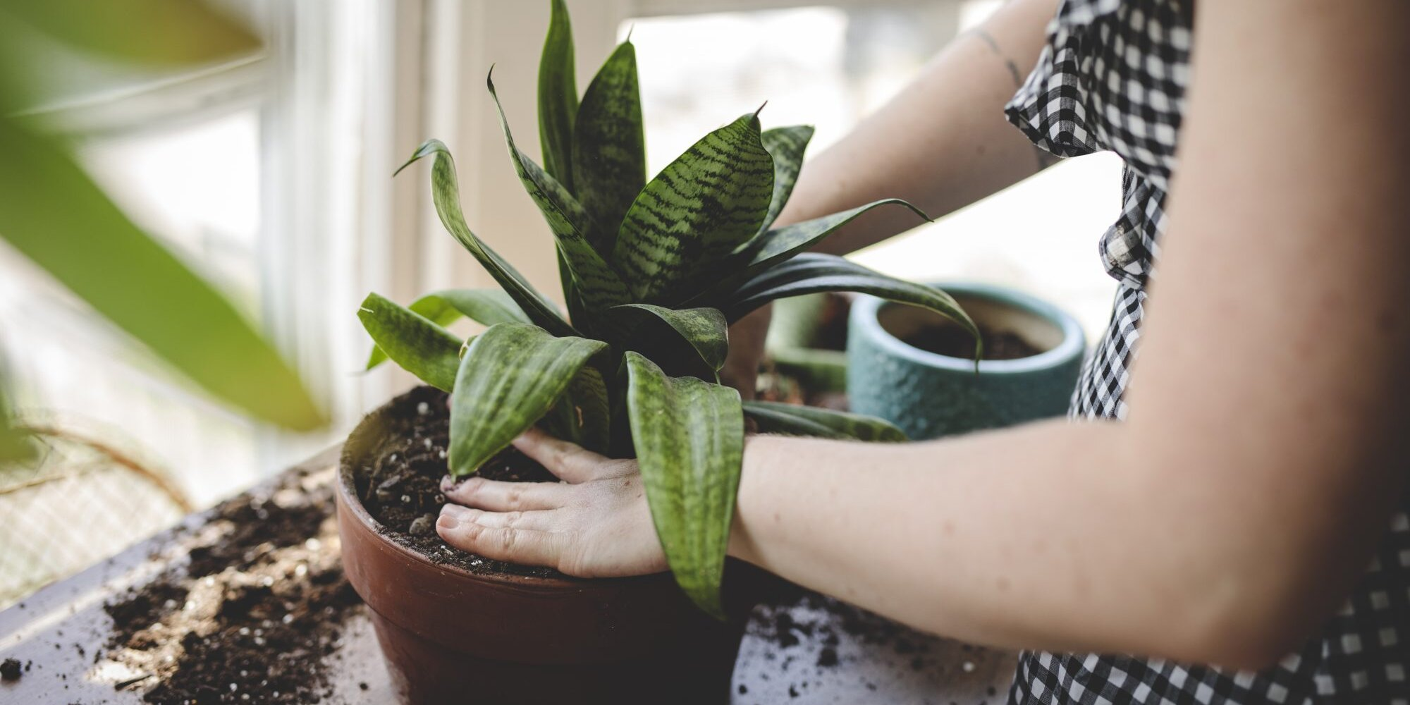 Yes, You Should Fertilize Your Houseplants—Here's How