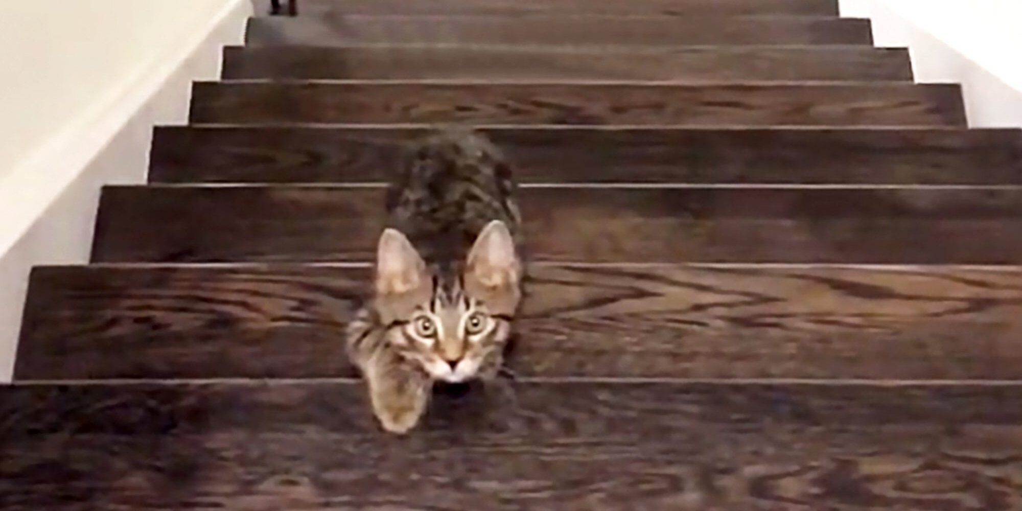 We're Convinced This Kitten Would Win 'Squid Game'
