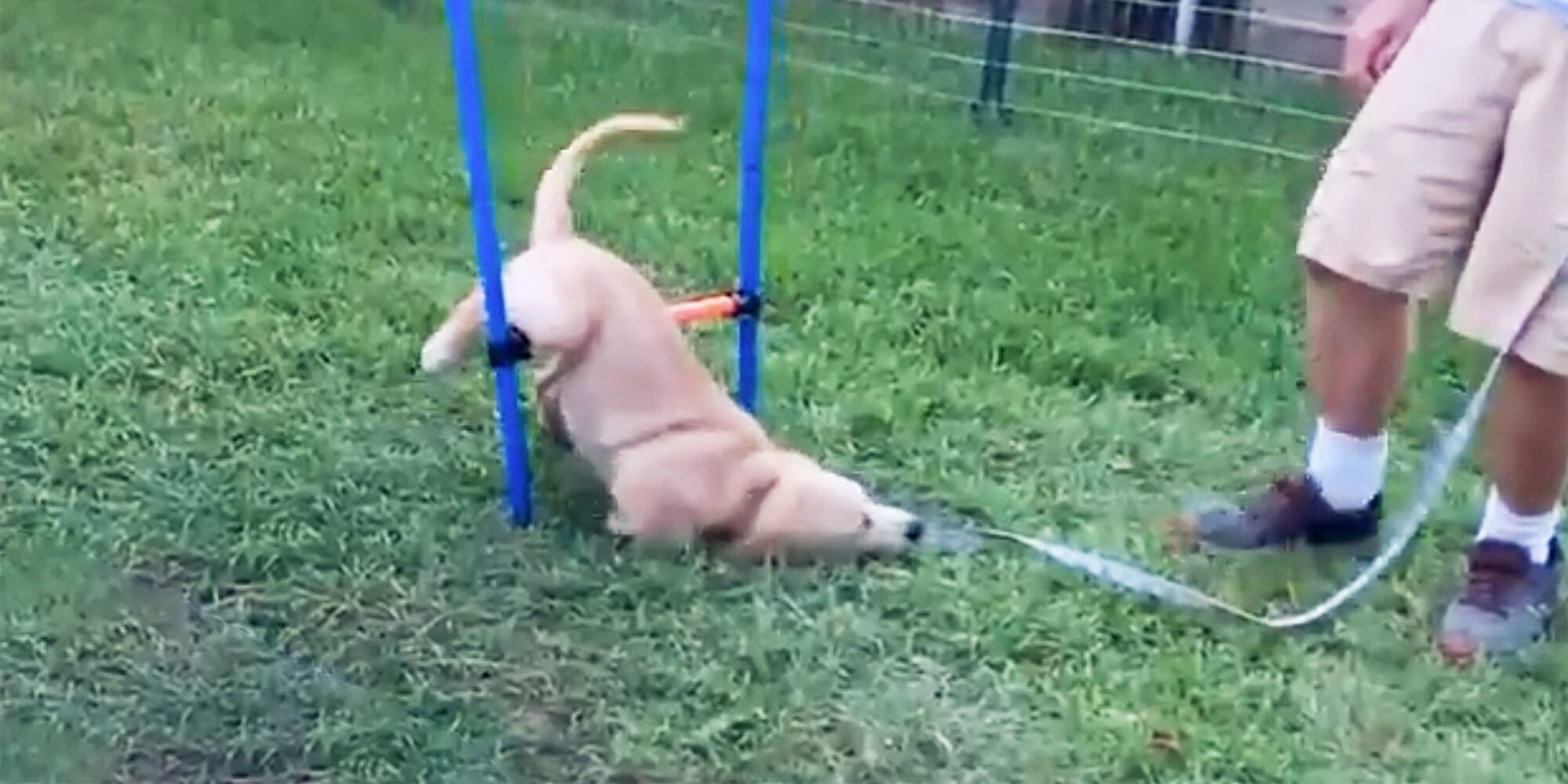 Puppy Gets Stuck on a Dog Obstacle Course in the Most Adorable Way