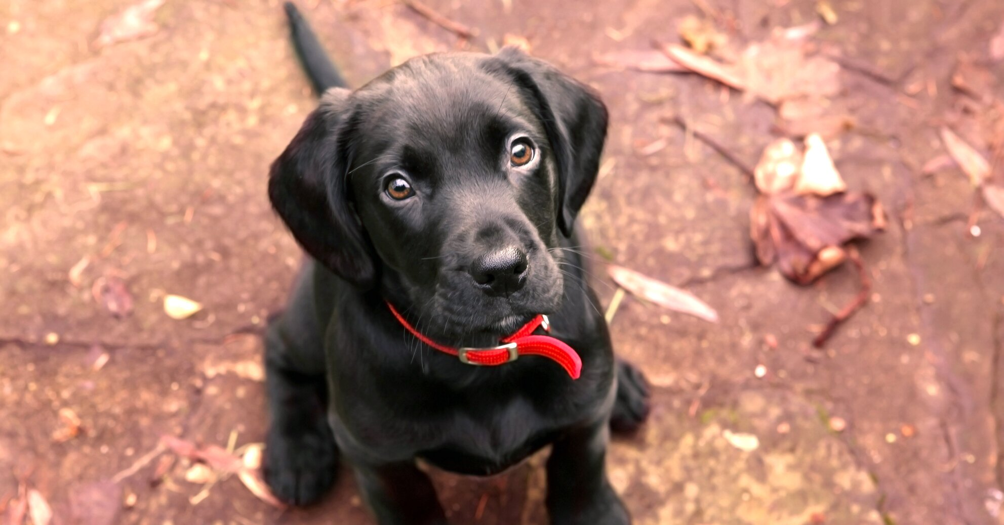 5 Easy Tricks To Teach Your Dog Without A Professional Trainer