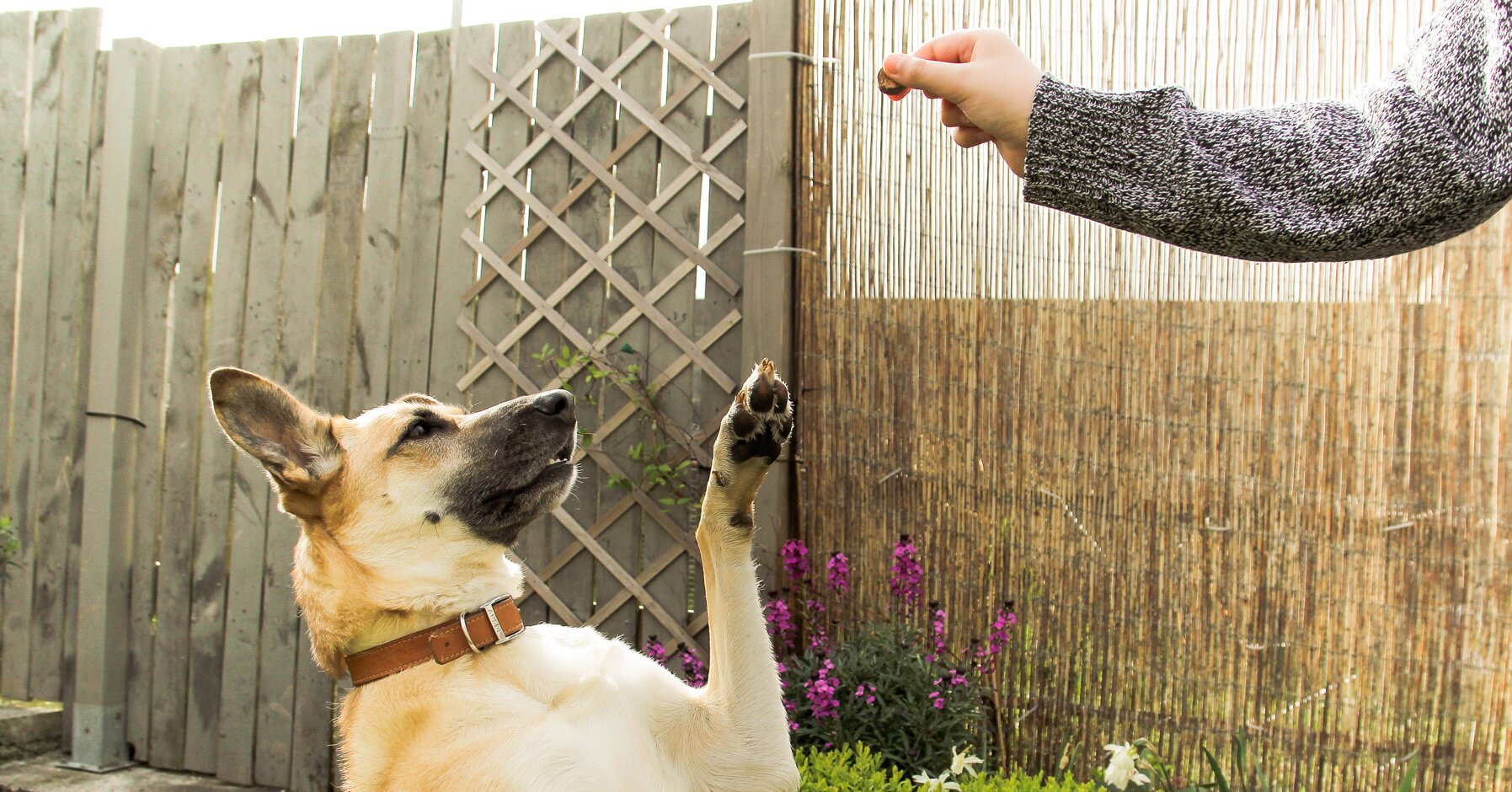 Five Basic Commands That Every Dog Should Learn