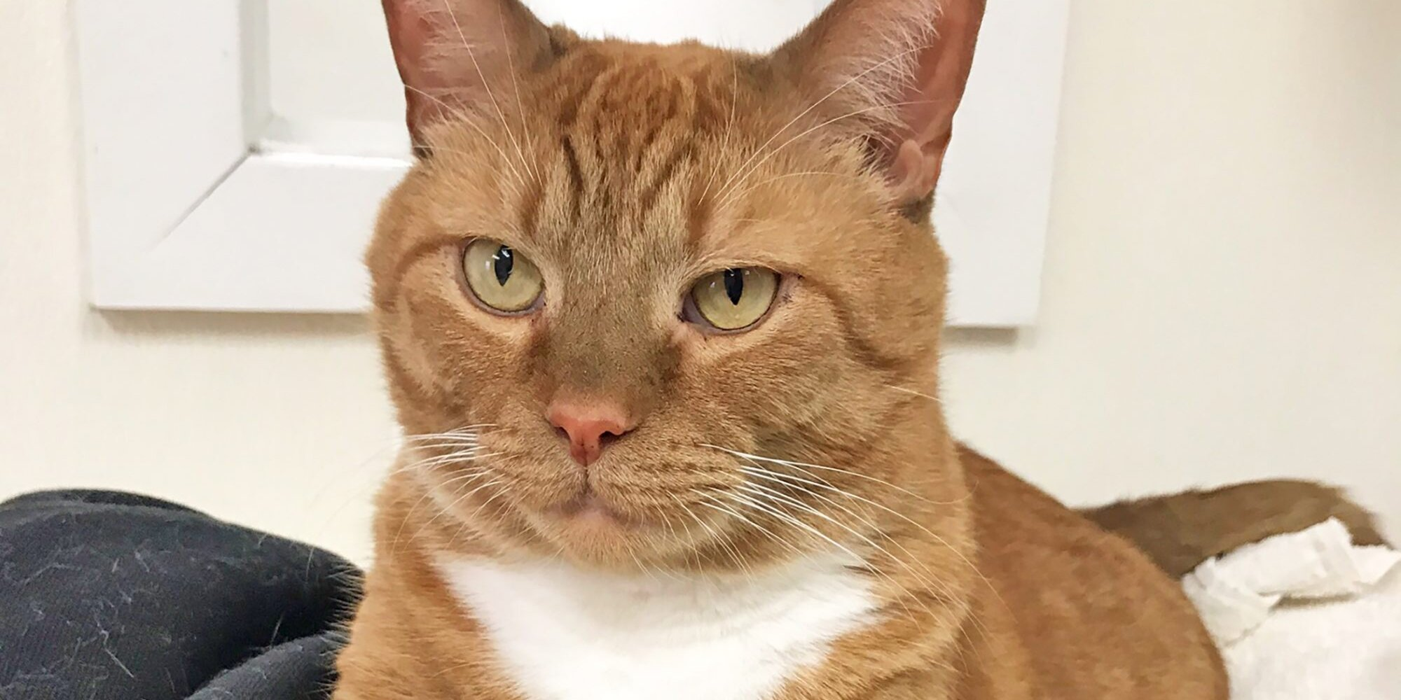 Loving Couple Ends This Ginger Tabby Cat's 6-Year Shelter Stay
