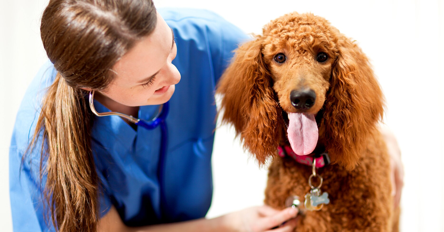 Seven Questions Every Pet Owner Should Ask Their Veterinarian