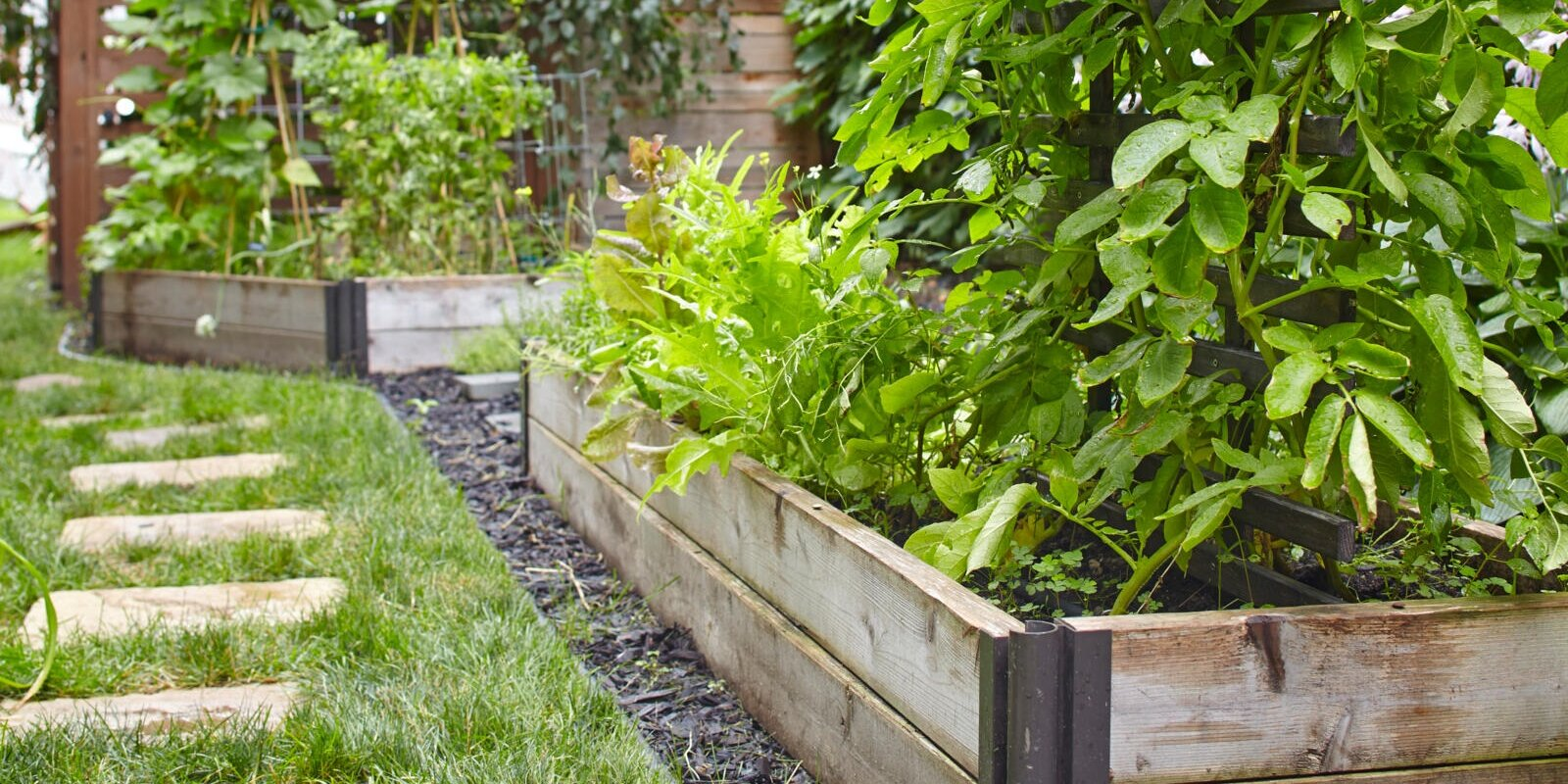 5 Smart Tips to Plan Your First Edible Garden