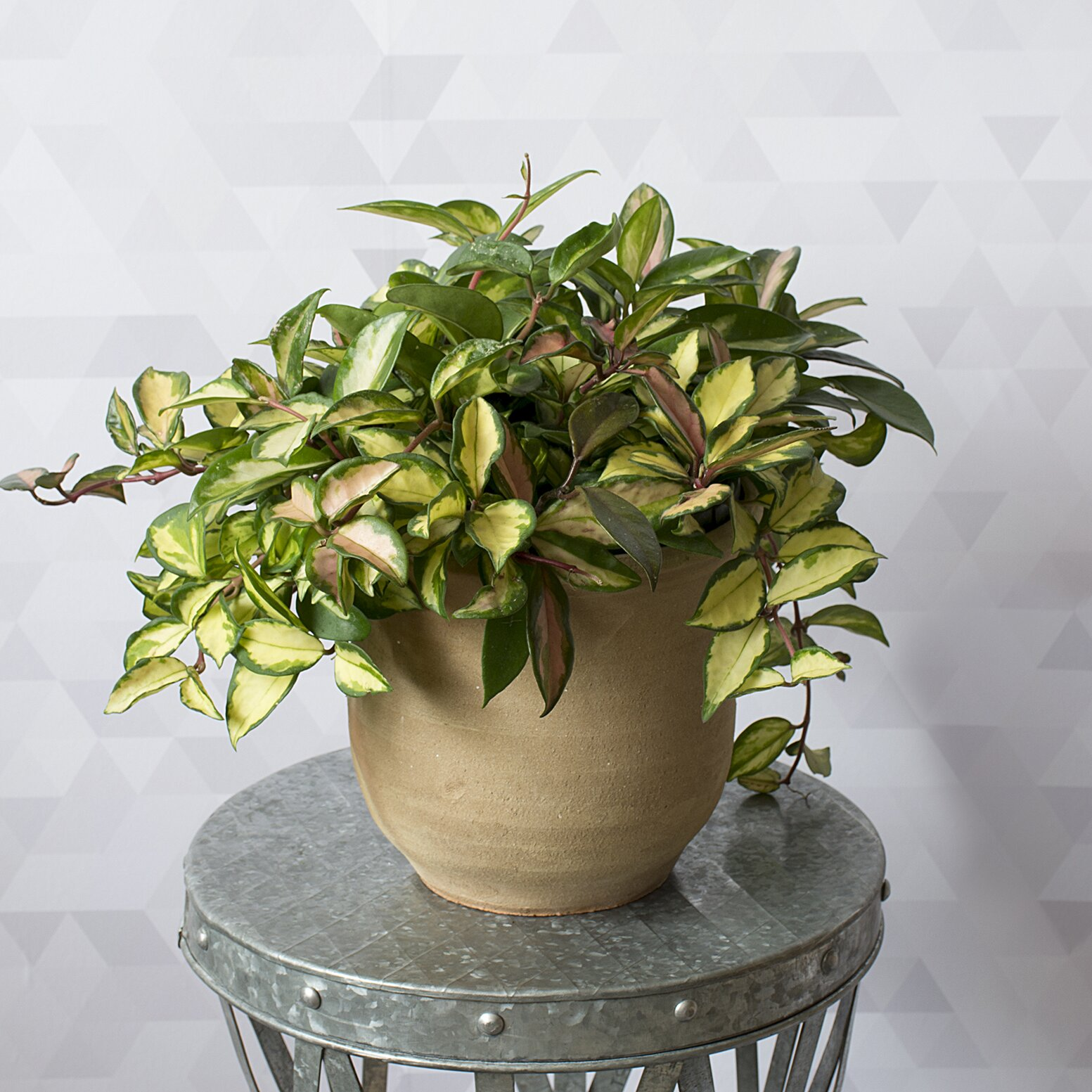 14 Hardy Houseplants That Will Survive The Winter Real Simple