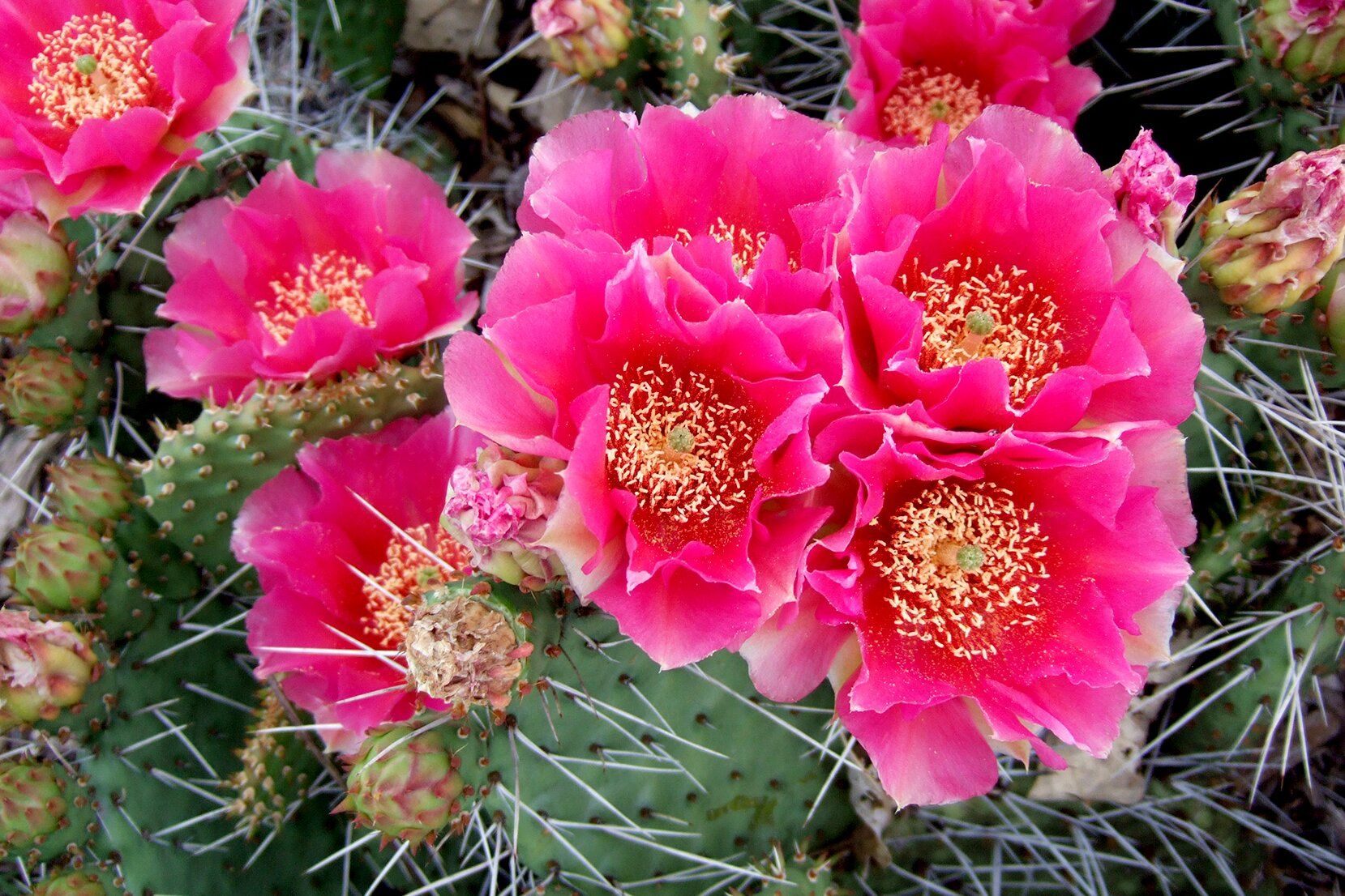 Cactus Plants In Cold Winter Climates