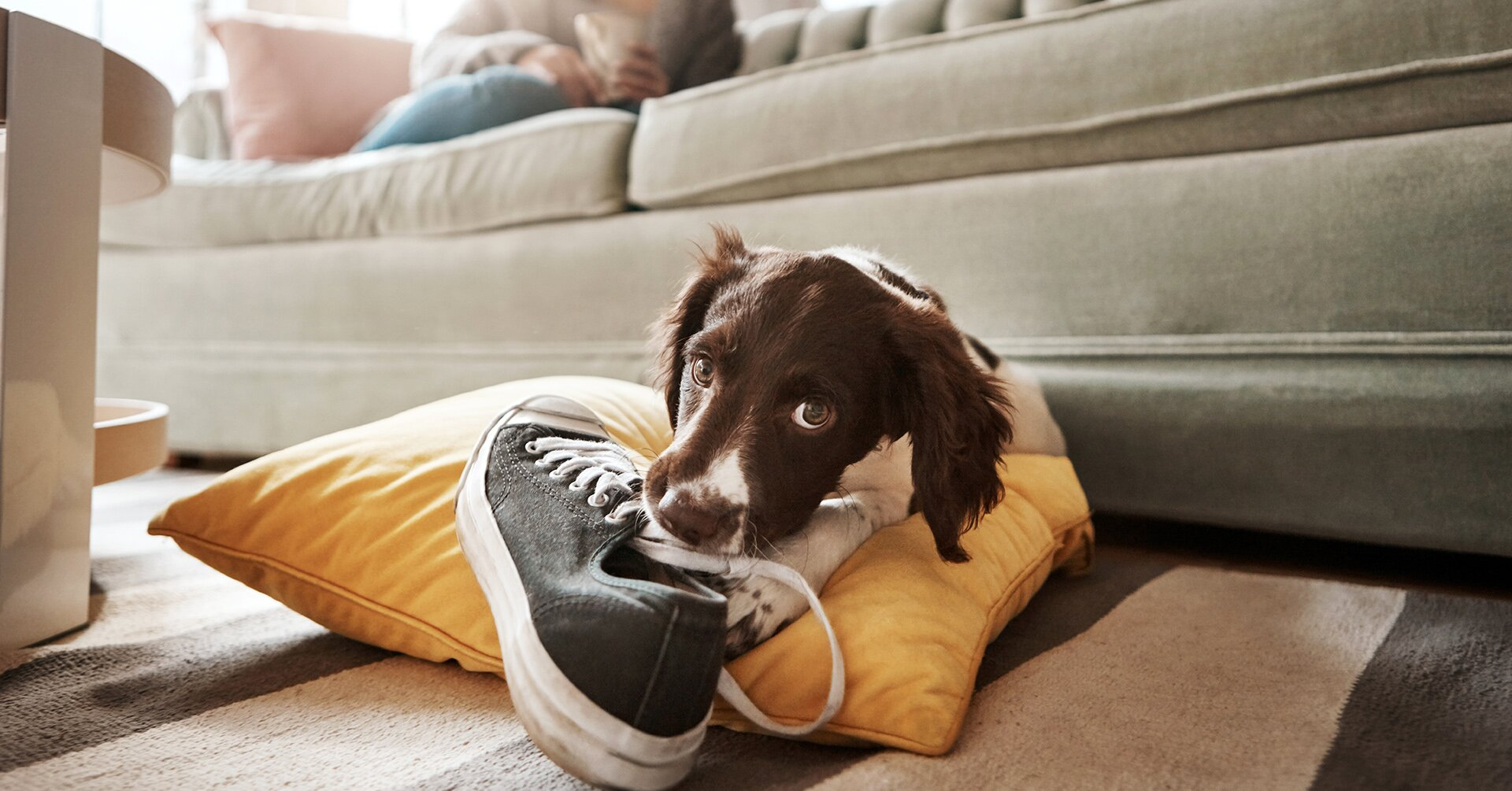 How to Stop Your Dog from Chewing Everything Inside Home