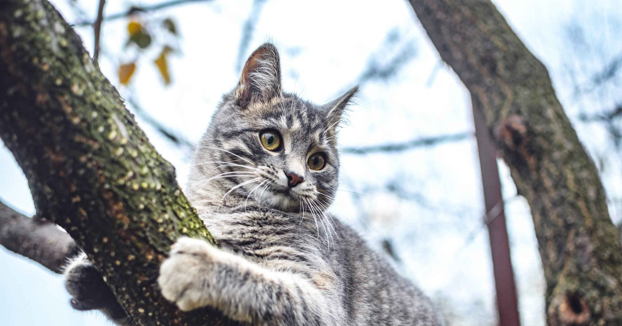 Man Tries to Rescue Cat from Tree, Also Gets Stuck