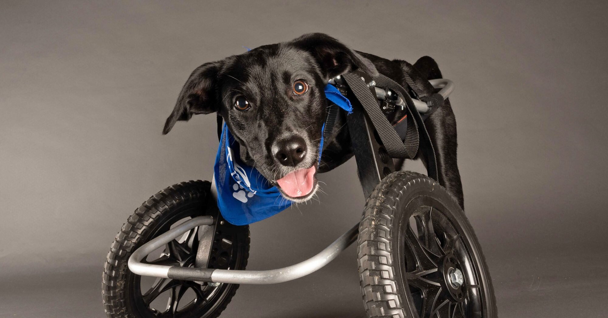 Check Out Jett, the Two-Wheeled Wonder of the 2021 Puppy Bowl!