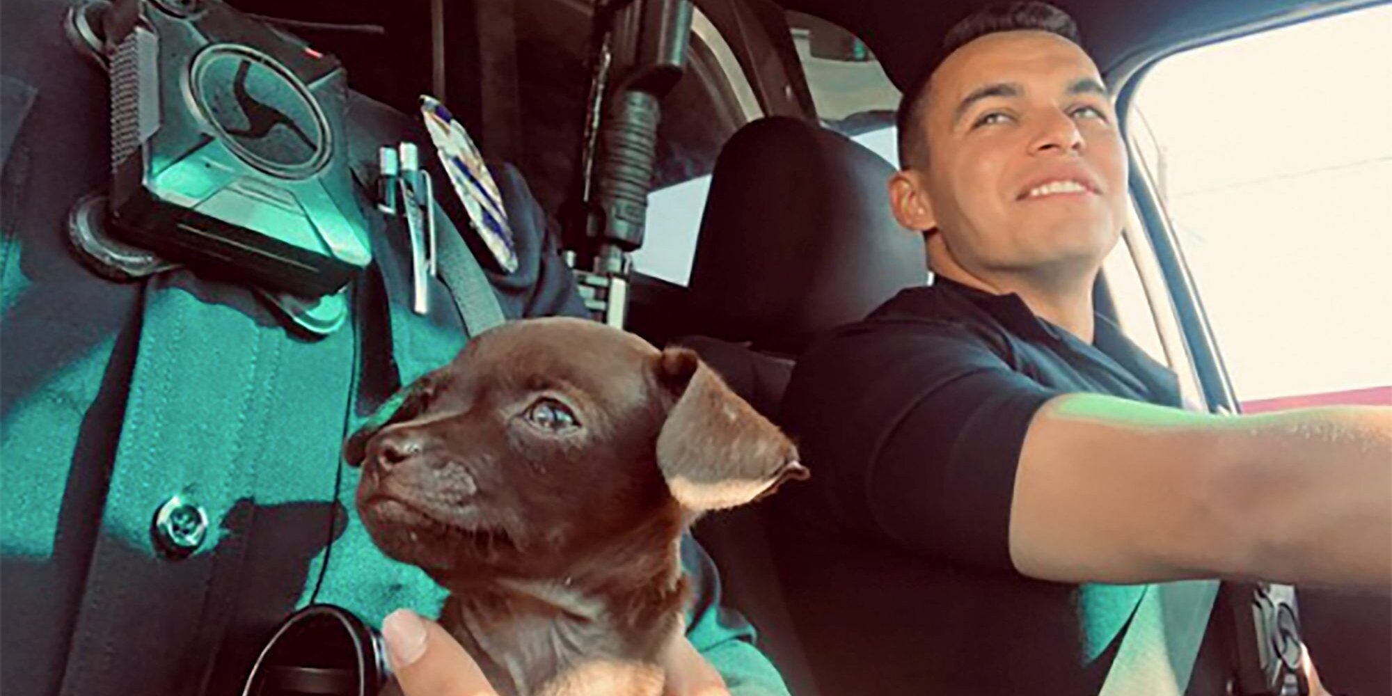 Tiny Puppy Wandering Streets of LA Follows Police for Help