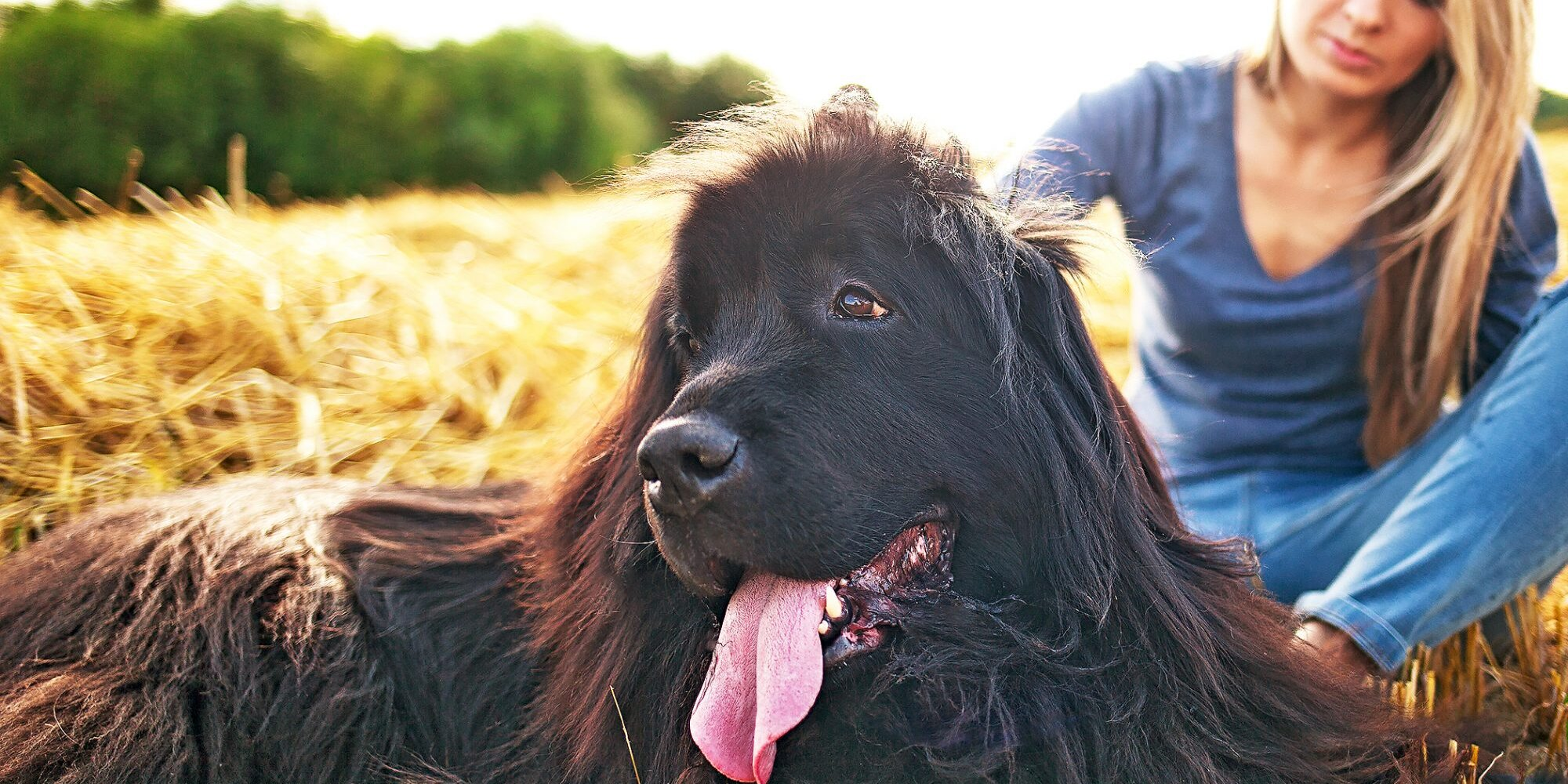 The 8 Best Mountain Dog Breeds