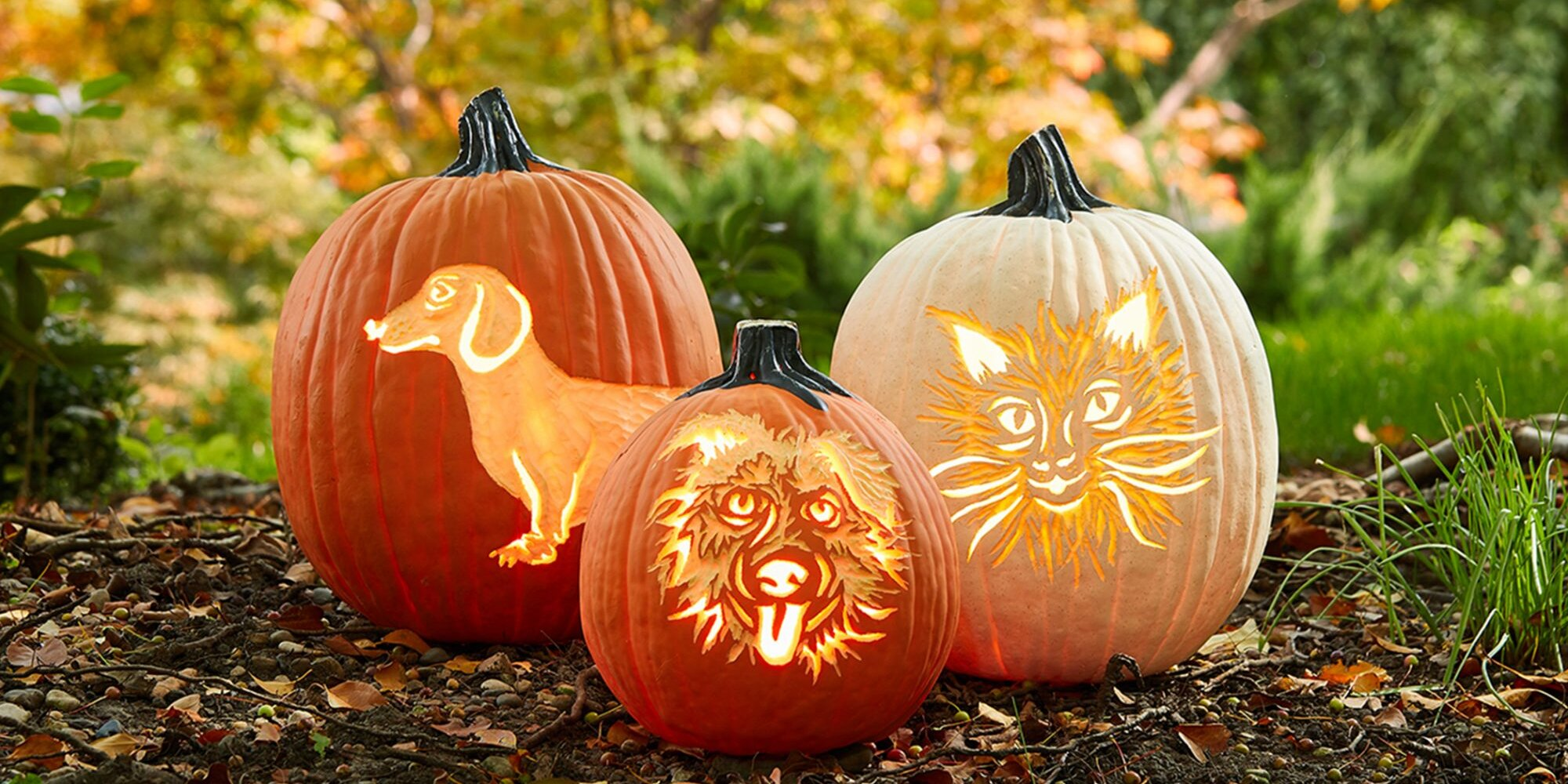 How to Carve Your Pet's Face on a Pumpkin for Halloween